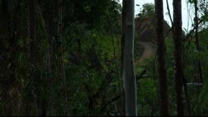 « Feu la Forêt », un (non)trailer pour un film à venir